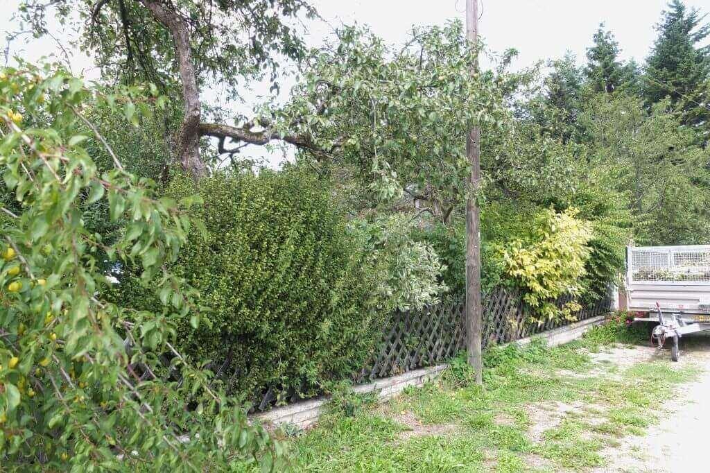 Hecke pflege pflanzung gartenpflege gartenservice for Gartengestaltung unterschiedliche hohen