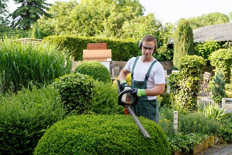 Mieter Gartenpflege Hecken Schneiden