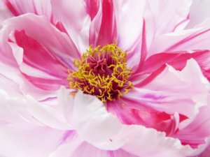 Garten der Seele, Selbstliebe, Selbsterkenntnis